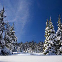 Wintersportarten mit der Familie